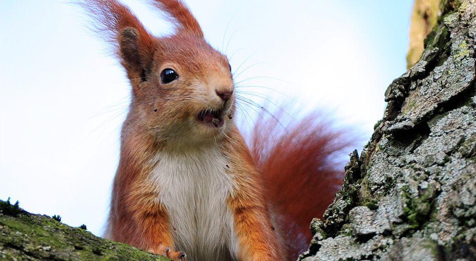 Eichhörnchen auf einem Ast - Bildquelle: dpa