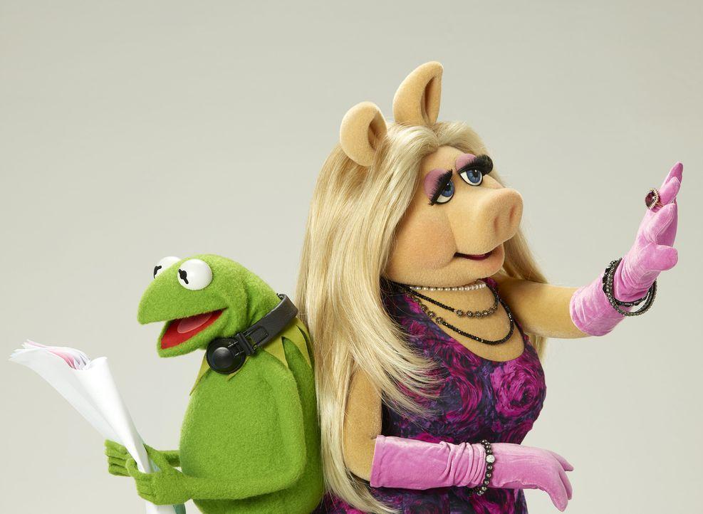 (1. Staffel) - Bei der Zusammenarbeit für ihre Late-Night-Talkshow sind Probleme vorprogrammiert: Kermit (l.) und Miss Piggy (r.) ... - Bildquelle: Bob D'Amico ABC Studios