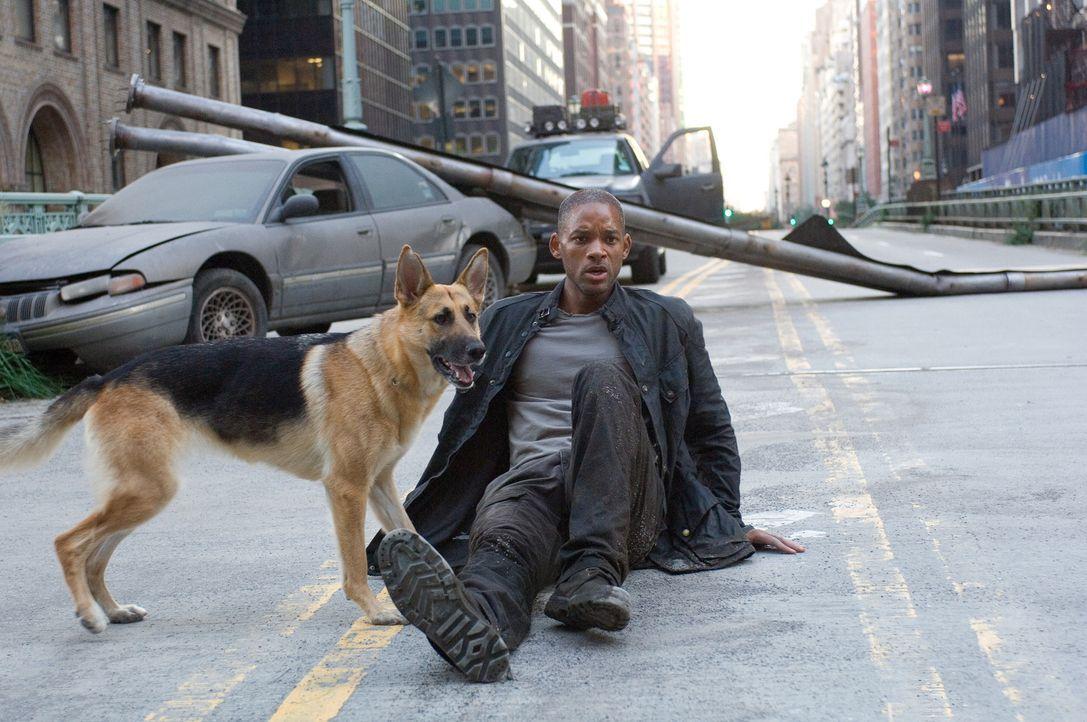 Als einziger Mensch in Manhattan versucht Robert Neville (Will Smith) mit Hilfe seines eigenen Blutes, ein Gegenmittel für ein genveränderndes Vir... - Bildquelle: Warner Brothers International