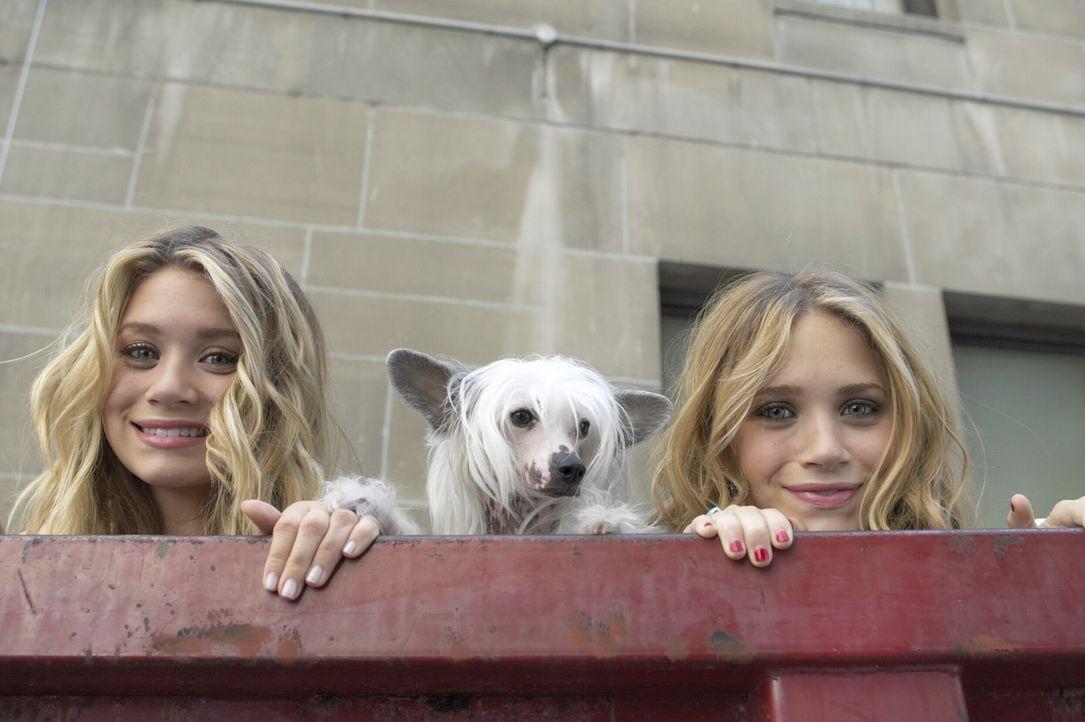 Die Geschwister Jane (Ashley Olsen, l.) und Roxanne Ryan (Mary-Kate Olsen, r.) haben außer der Tatsache, dass sie miteinander verwand und eineiige... - Bildquelle: Warner Brothers International Television