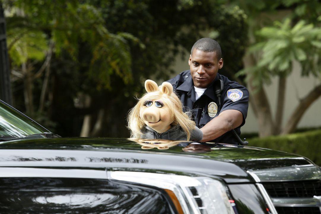 Was ist nur mit Miss Piggy (vorne) passiert? - Bildquelle: Nicole Wilder ABC Studios