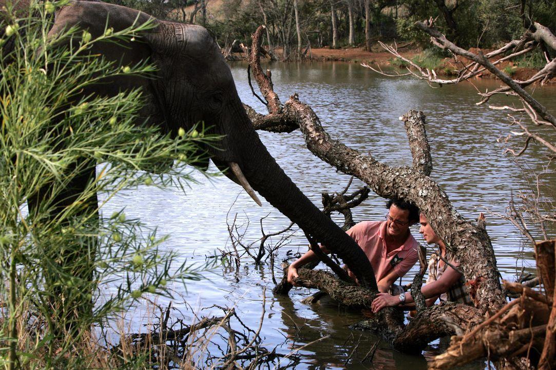 Auf der verzweifelten Suche nach einer menschlichen Ansiedlung können Moes (Jon Karthaus, l.) und Mike (Patrick Martens, r.) einem Elefanten helfen...