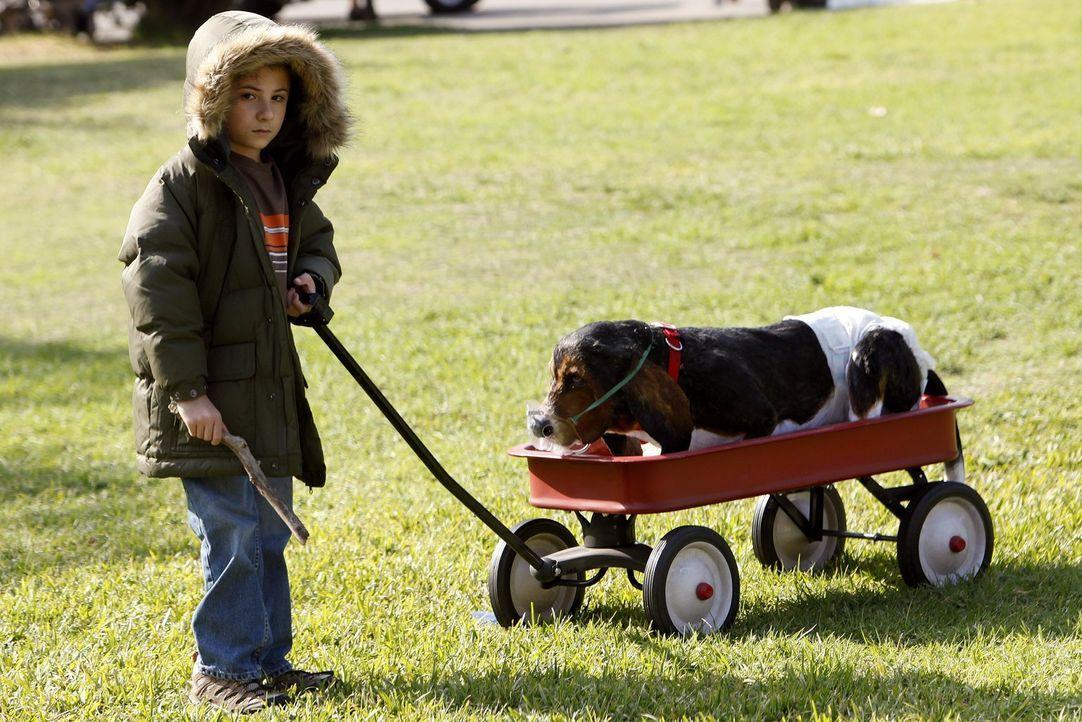 Er will lernen, Verantwortung zu übernehmen, deswegen spielt Brick (Atticus Shaffer) den Hundesitter für den Vierbeiner seiner Tanten ... - Bildquelle: Warner Brothers
