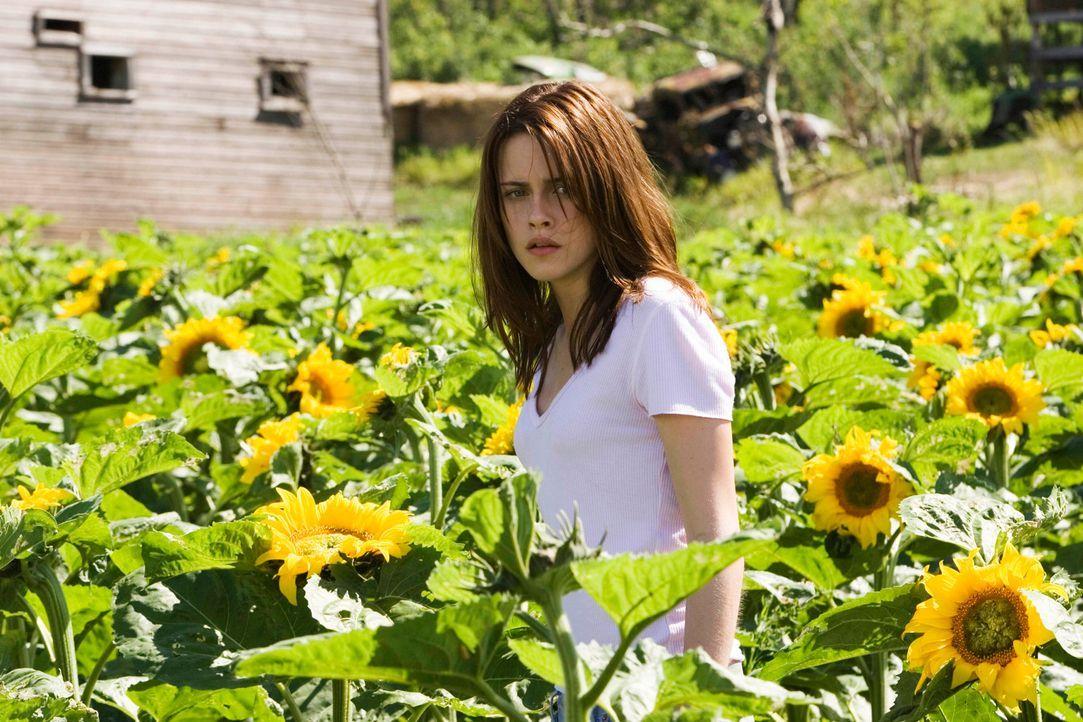 Eines Tages zieht Roy Solomon mit seiner Familie auf eine heruntergekommene Sonnenblumen-Farm in North Dakota. Die angenehme Landstille hat bald ein... - Bildquelle: 2005 GHP-3 SCARECROW, LLC.