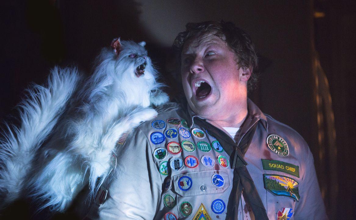 Niemals hätte Augie (Joey Morgan) gedacht, dass sich Ms. Fielders Miezen in gefährliche Zombiekatzen verwandeln könnten ... - Bildquelle: Jamie Trueblood 2015 Paramount Pictures. All Rights Reserved.