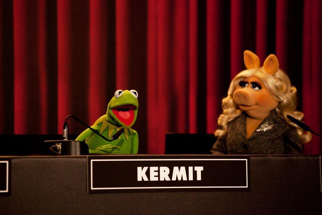 muppets-pressekonferenz-berlin-11-hanna-boussouar-walt-disney-companyjpg 1900 x 1267 - Bildquelle: Hanna Boussouar/Walt Disney Company