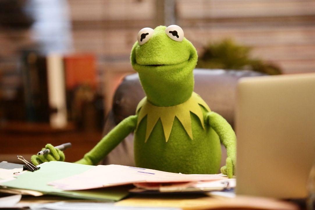 Die Gang hat eine legendäre Nacht bei Karaoke. Doch Kermit ist nicht begeistert, als niemand am nächsten Tag zur Arbeit erscheint ... - Bildquelle: Nicole Wilder ABC Studios