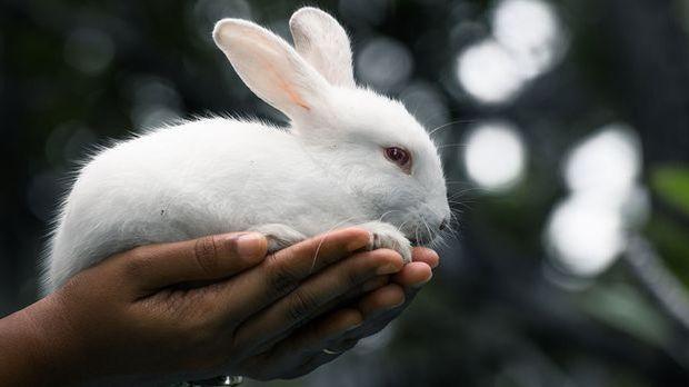 Tierversuchsfrei und absolut vegane Inhaltsstoffe – wir verraten euch auf wel...