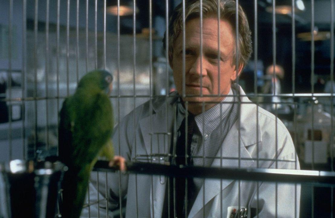 Der Verhaltensforscher Dr. Reingold (Bruce Davison, r.) sieht seine große Chance gekommen, als er Paulie (l.) gefangen nehmen kann. Doch der kluge... - Bildquelle: DreamWorks