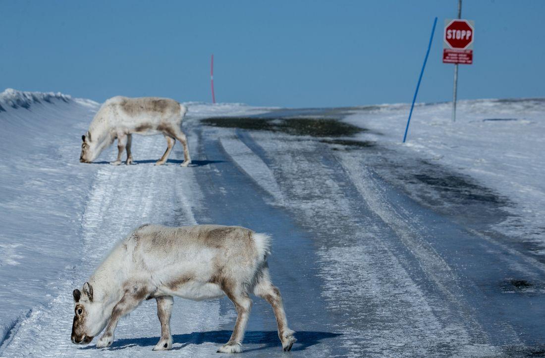 Weltweit schmelzen die Eisvorkommen der Erde mit dramatischen Folgen für Tier und Mensch ... - Bildquelle: ProSieben