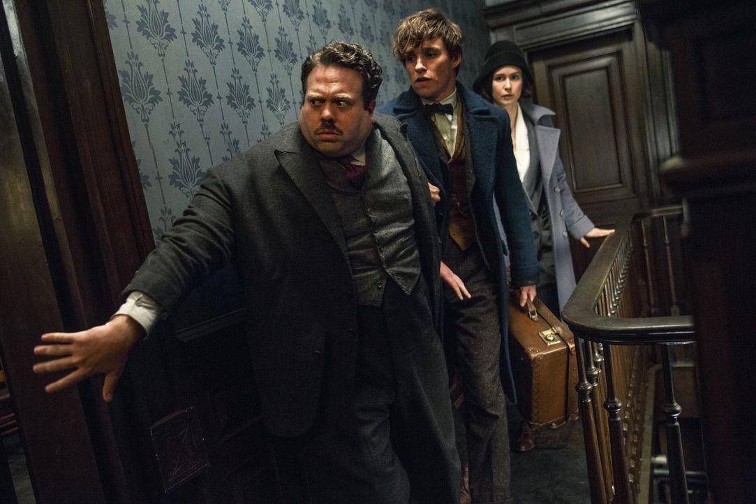 (v.l.n.r.) Jacob Kowalski (Dan Fogler); Newt Scamander (Eddie Redmayne); Tina Goldstein (Katherine Waterston) - Bildquelle: Warner Bros.