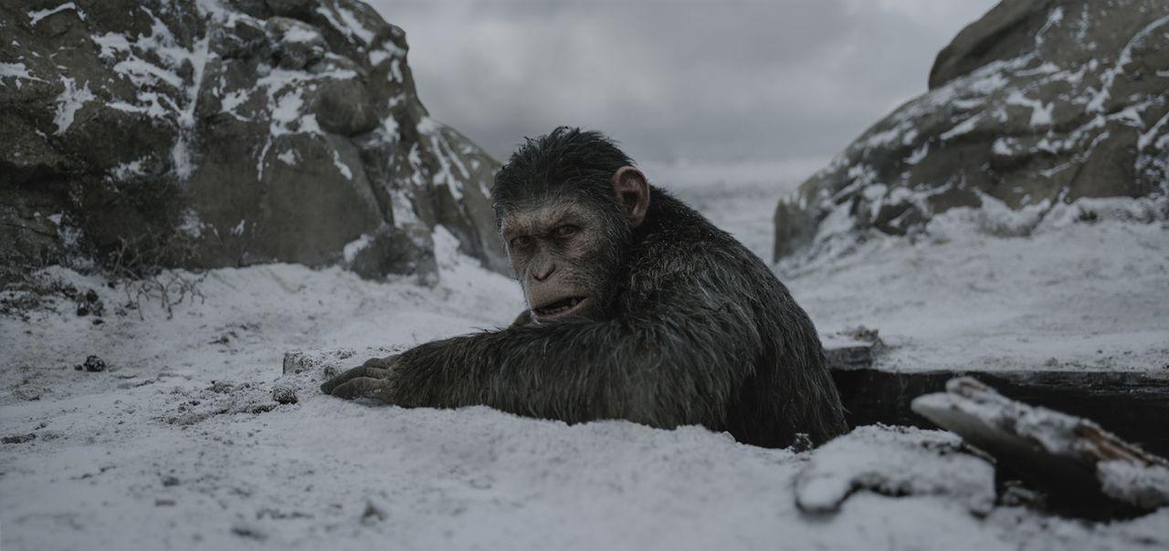 Ceasar (Andy Serkis) - Bildquelle: 2017 Twentieth Century Fox Film Corporation.  All rights reserved.