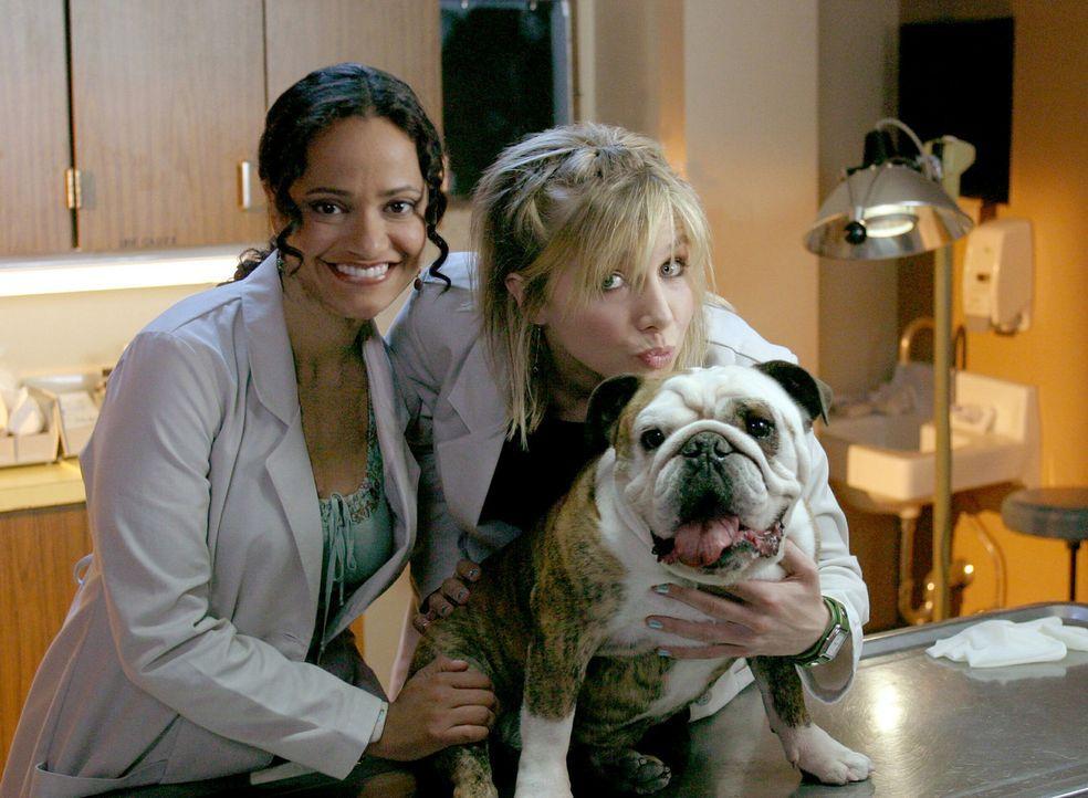Haben einen neuen Freund: Elliot (Sarah Chalke, r.) und Carla (Judy Reyes, l.) ... - Bildquelle: Touchstone Television