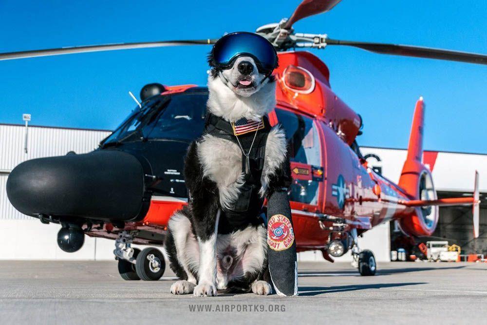 Flughafenhund - Bildquelle: Internet