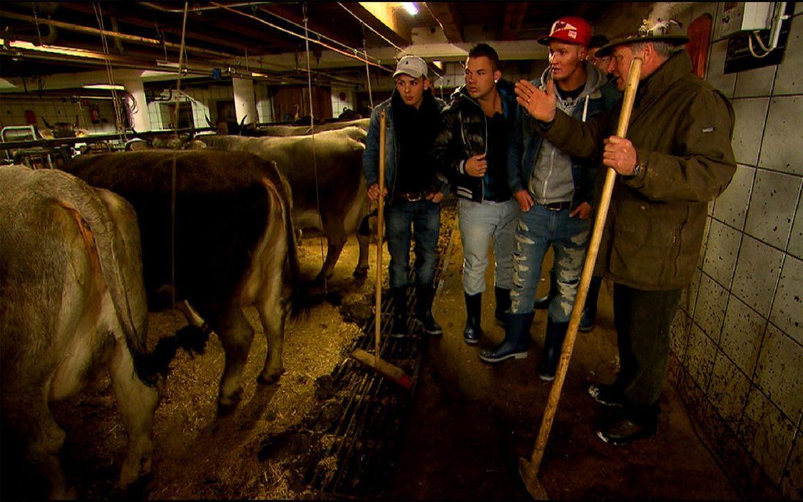 Auch die Jungs bekommen von Jakob (r.) eine Aufgabe im Kuhstall: Emilio (l.), Jerôme (2.v.r.) und Maikiboy (2.v.l.) ... - Bildquelle: ProSieben