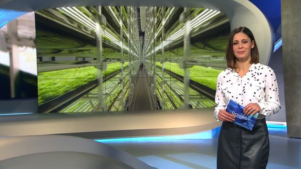 Galileo - Galileo - Samstag: Vertical Farming New York