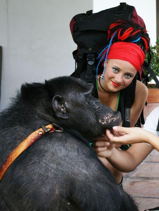 Taffie (Monique van der Werff) muss sich mit einem liebestollen Affen herumschlagen ...