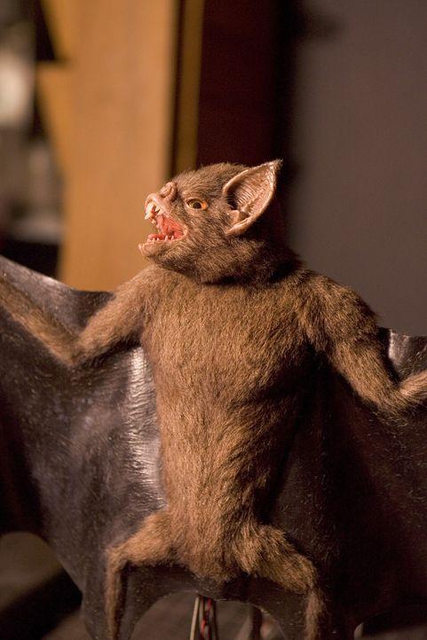 Harmlose Vampirfledermäuse mutieren durch eine verseuchte Wasserquelle in aggressive Monster ? - Bildquelle: 2005 Sony Pictures Television Inc. All Rights Reserved.