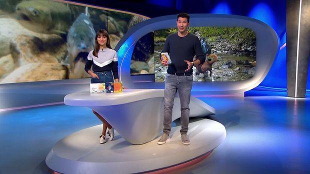Galileo - Galileo - Sonntag: Gefahr In Der Wildnis: Beruf Lachszähler