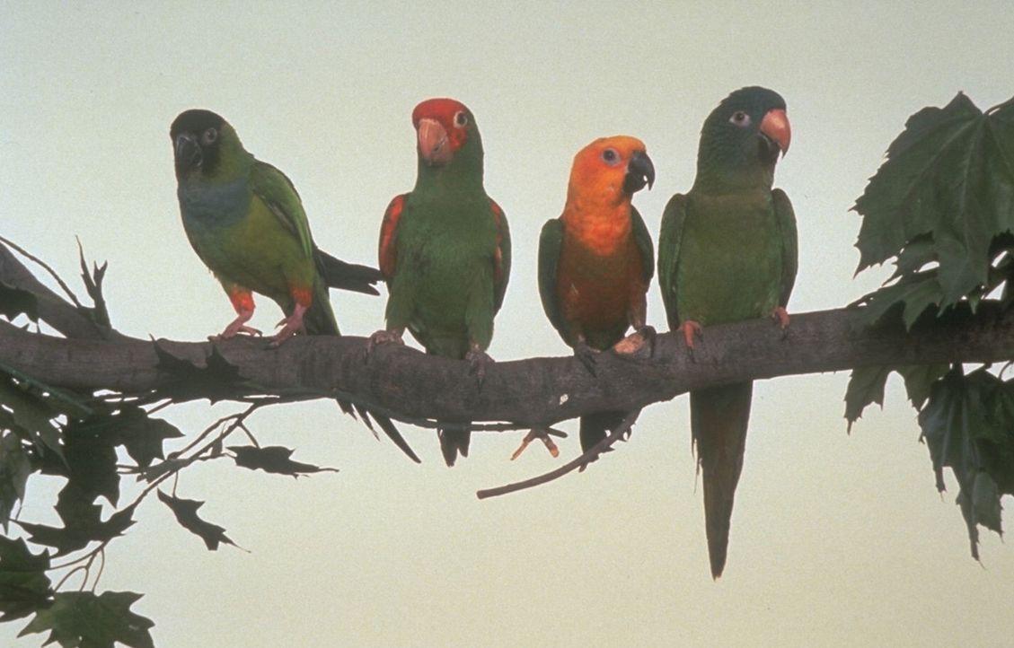 Auf der langen Suche gewinnt Paulie, r. jede Menge neuer Freunde ... - Bildquelle: DreamWorks