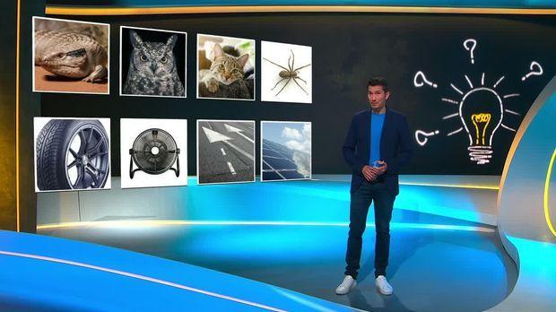 Galileo - Galileo - Dienstag: Wie Tiere Unsere Technik Besser Machen