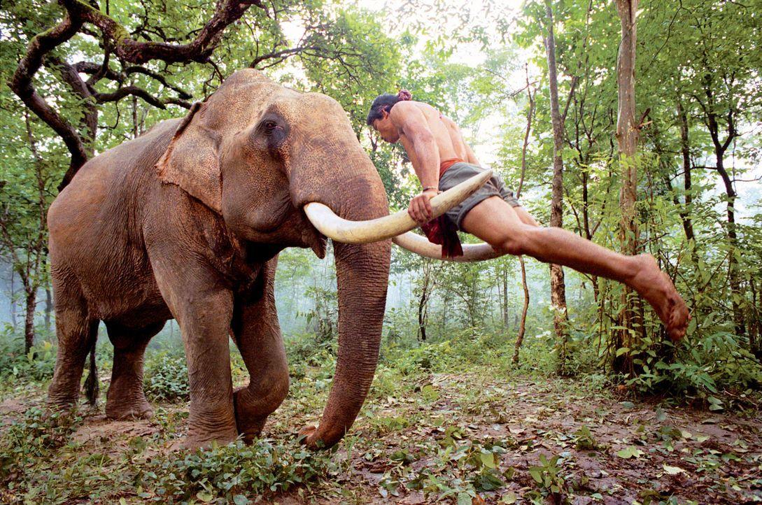 """Für Kham (Tony Jaa) sind die Elefanten in seinem Dorf mehr als nur Spielgefährten. Klar, dass er alles daran setzt, seine """"Freunde"""" aus der Hand d... - Bildquelle: e-m-s the DVD-Company"""
