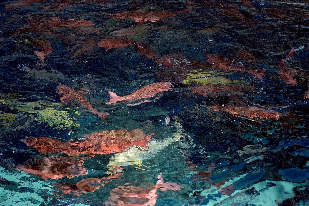 gntm-stf08-epi02-unterwasser-shooting-44-oliver-s-prosiebenjpg 2000 x 1331 - Bildquelle: Oliver S. - ProSieben