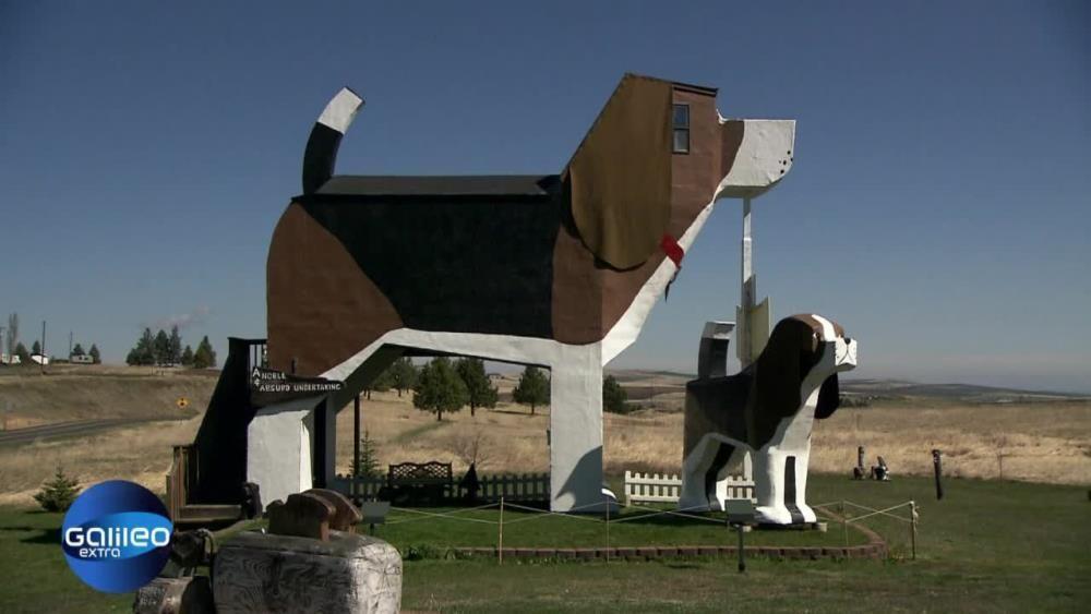 Hunde Haus