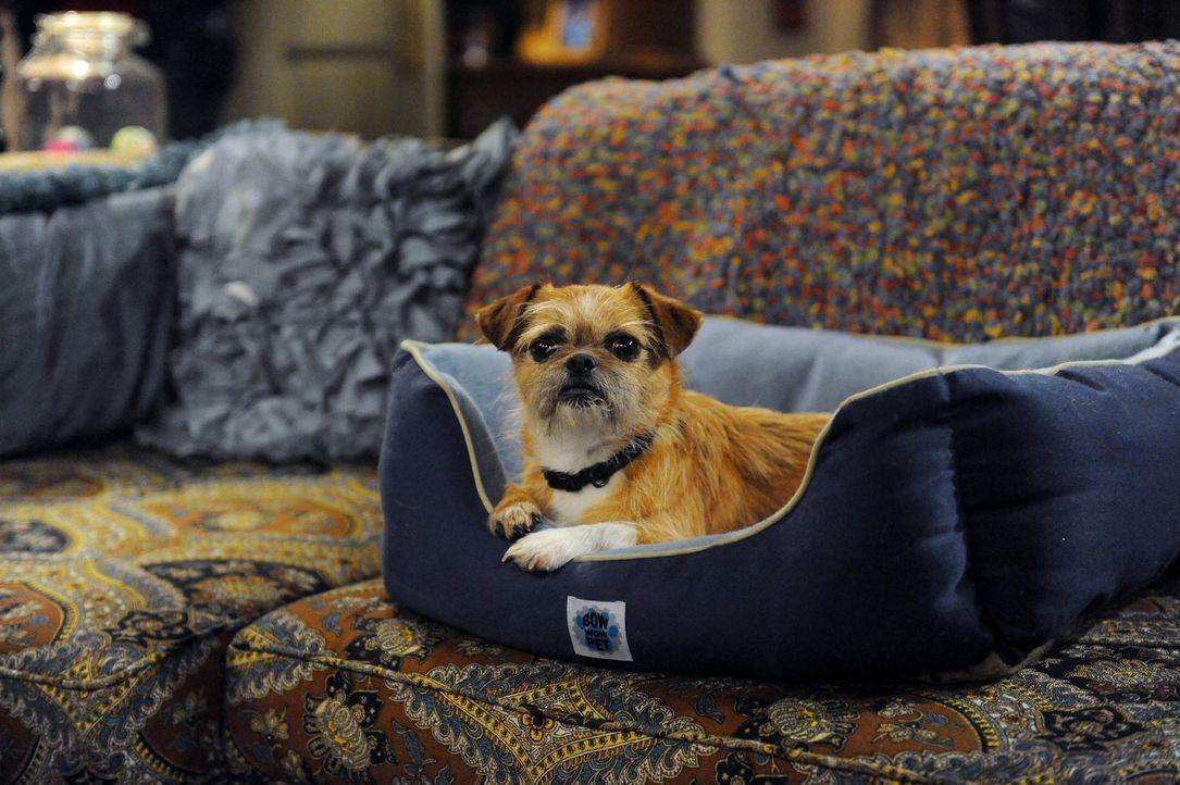 Als Peggy verreist, lässt sie ihren geliebten Hund Jim bei Mike und Molly. Doch ist das eine gute Idee? - Bildquelle: Warner Brothers