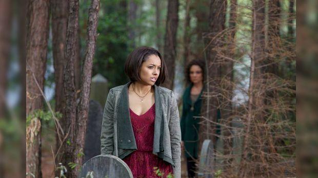 Vampire Diaries Wann Gehts Weiter