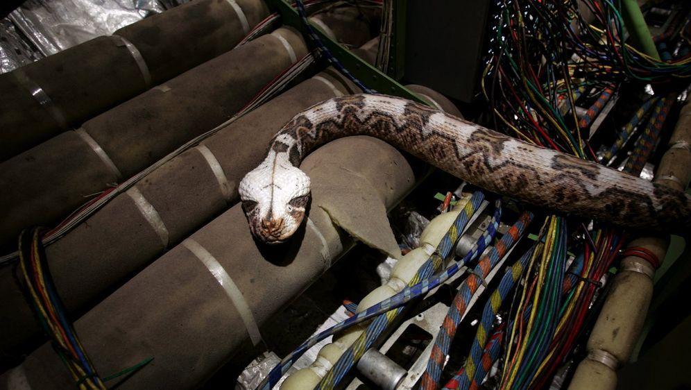 Snakes on a Plane - Bildquelle: Warner Brothers