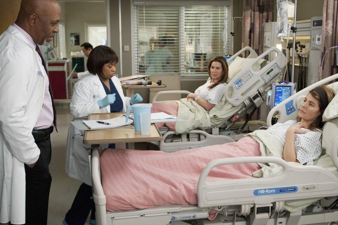 Webber (James Pickens, Jr., l.) und Bailey (Chandra Wilson, 2.v.l.) kümmern sich um ein zänkisches Geschwisterpaar (Nia Vardalos, r. und Peri Gilp... - Bildquelle: ABC Studios
