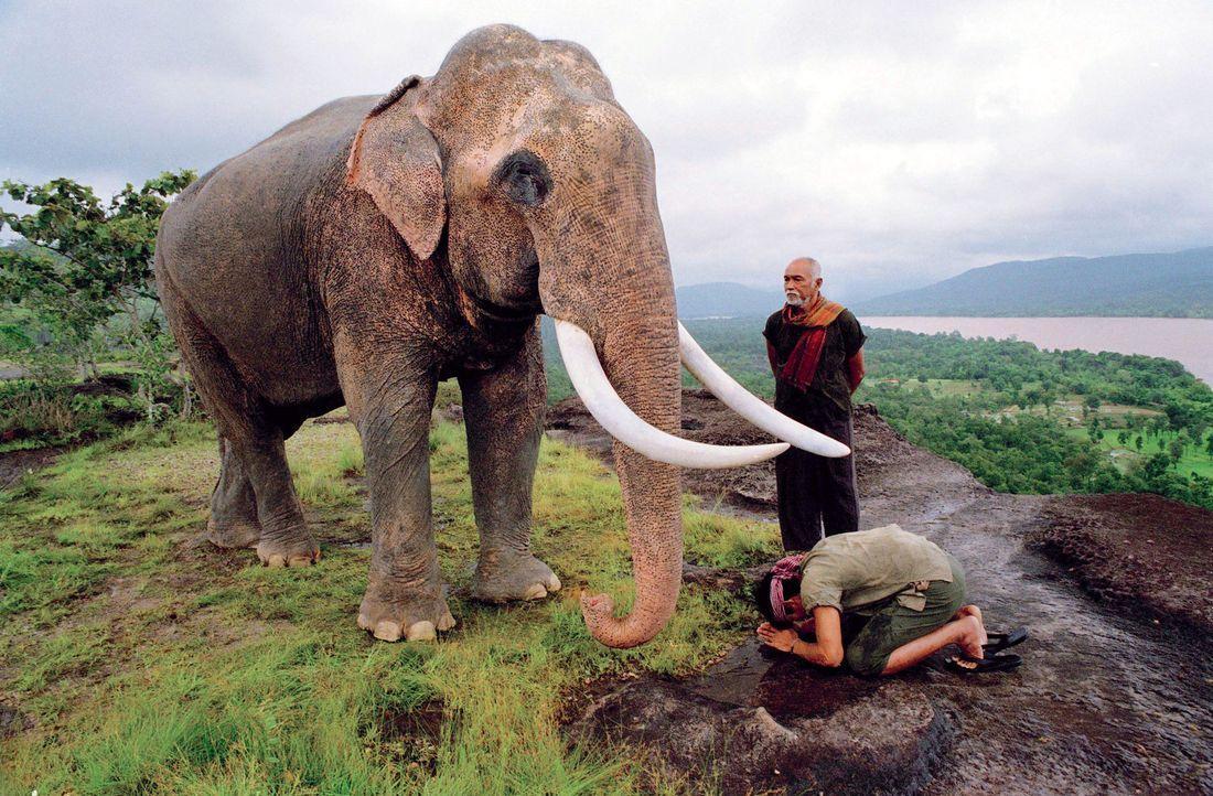 Kham (Tony Jaa, vorne) und sein Vater (Sotorn Rungruaeng, hinten) verehren die Elefanten des Dorfes zutiefst. Deshalb ist die Bestürzung sehr groß... - Bildquelle: e-m-s the DVD-Company