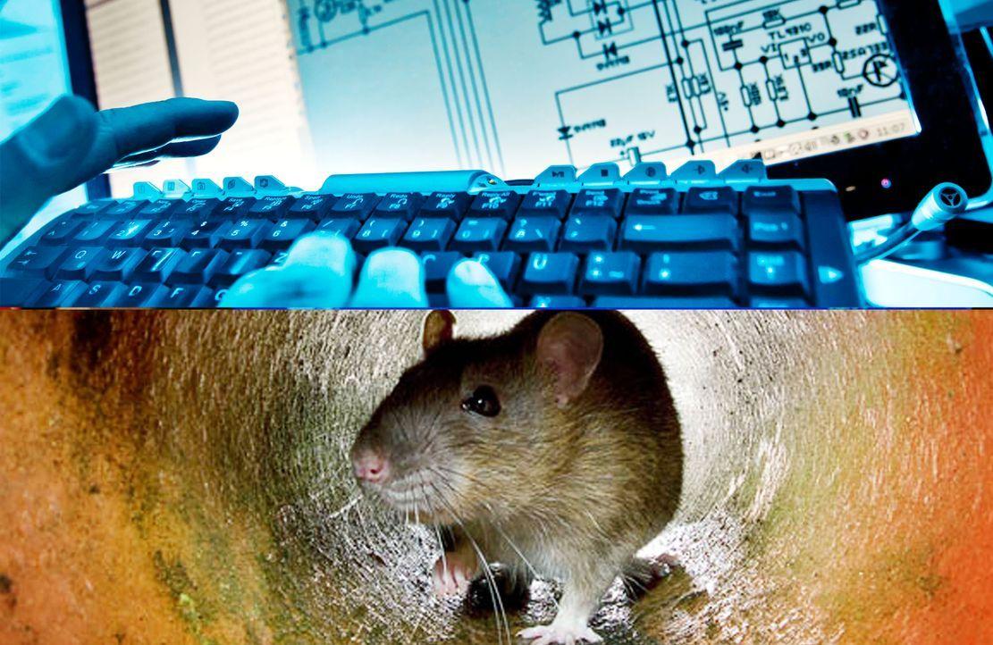 hacker-ratte-getty-AFP - Bildquelle: dpa-getty-AFP
