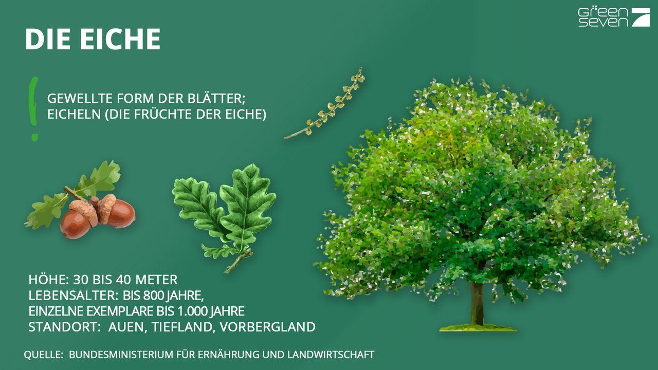 Eiche - Bildquelle: ProSieben