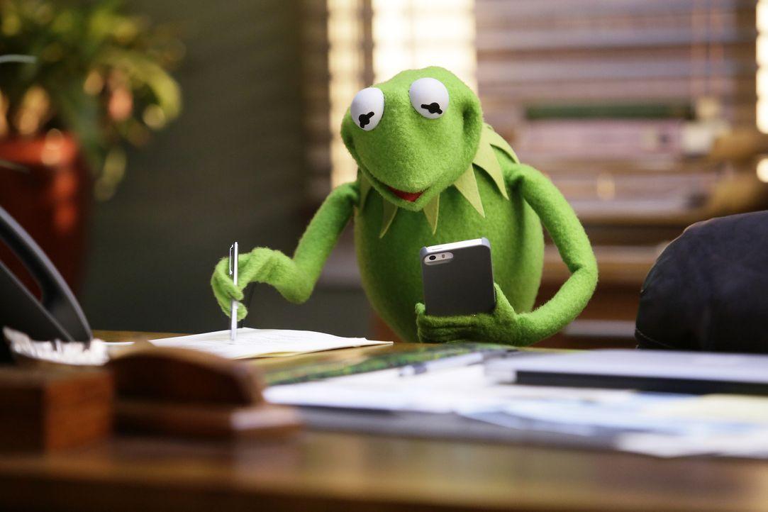 Steht vor einem Problem, als er Fozzie sagen muss, dass er seine Sketche schrecklich findet: Kermit ... - Bildquelle: Nicole Wilder ABC Studios