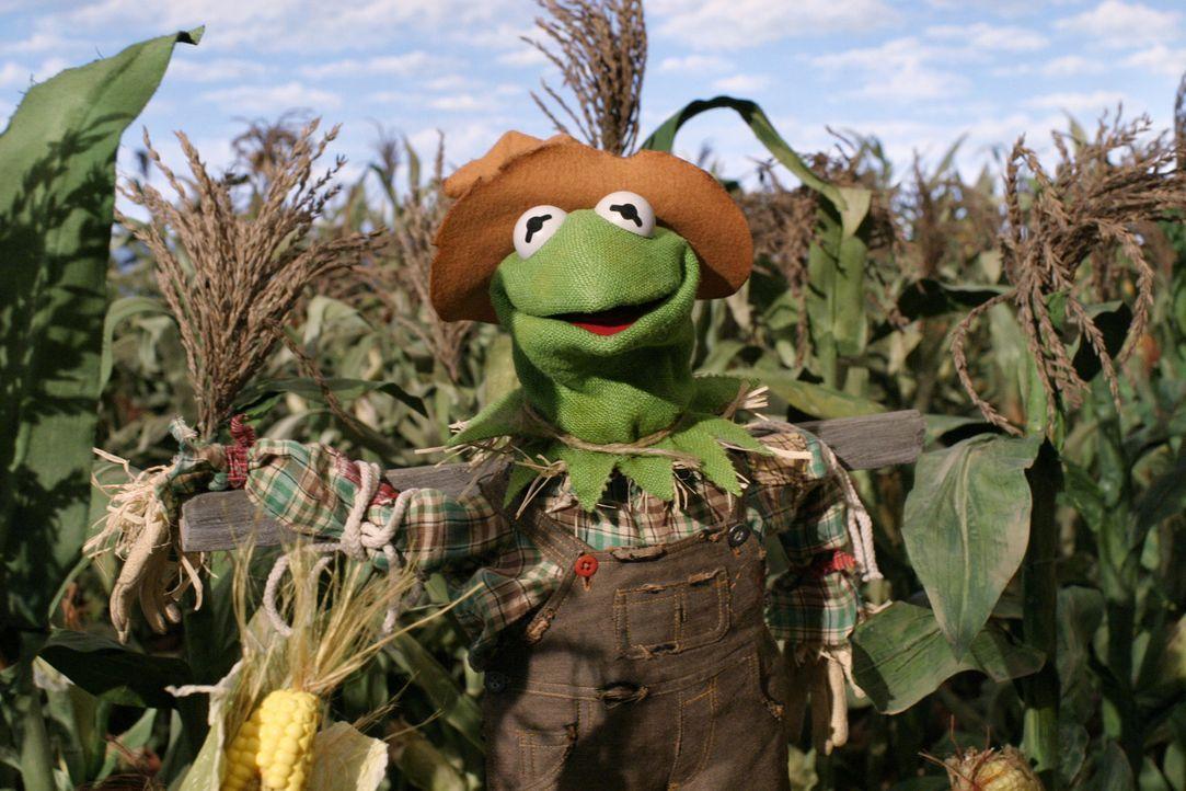 Obwohl der Zauberer von Oz die Vogelscheuche davon zu überzeugen versucht, dass es ihm weder an Herz, Verstand noch Mut fehle, sondern lediglich der... - Bildquelle: The Muppets Holding Company, LLC. MUPPETS characters and elements are trademarks of the Muppet Holding Company, LLC.  All rights reserved