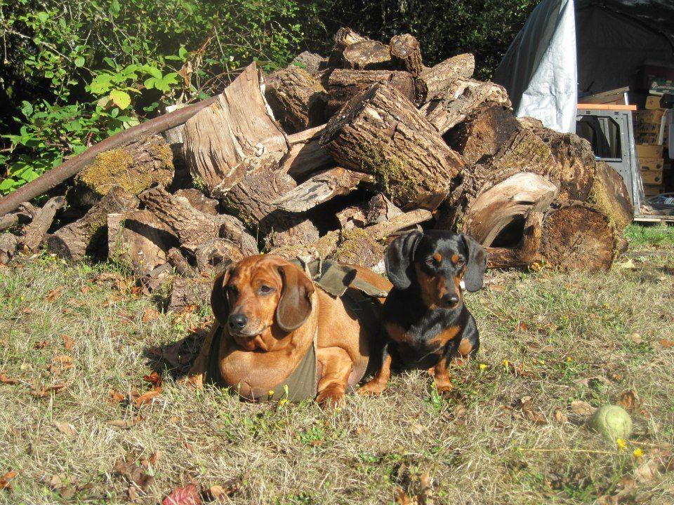 Obie beim Sonnen - Bildquelle: Obie Dog Journey; https://www.facebook.com/BiggestLoserDoxieEdition?sk=photos_albums;