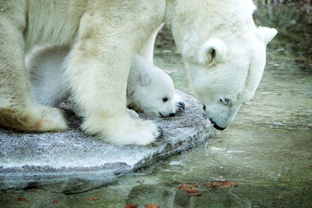 Im norwegischen Spitzbergen erkundet Stefan Gödde gemeinsam mit einem Eisbär-Guide den immer kleiner werdenden Lebensraum der mächtigen Raubtiere ..... - Bildquelle: Benedikt Müller ProSieben