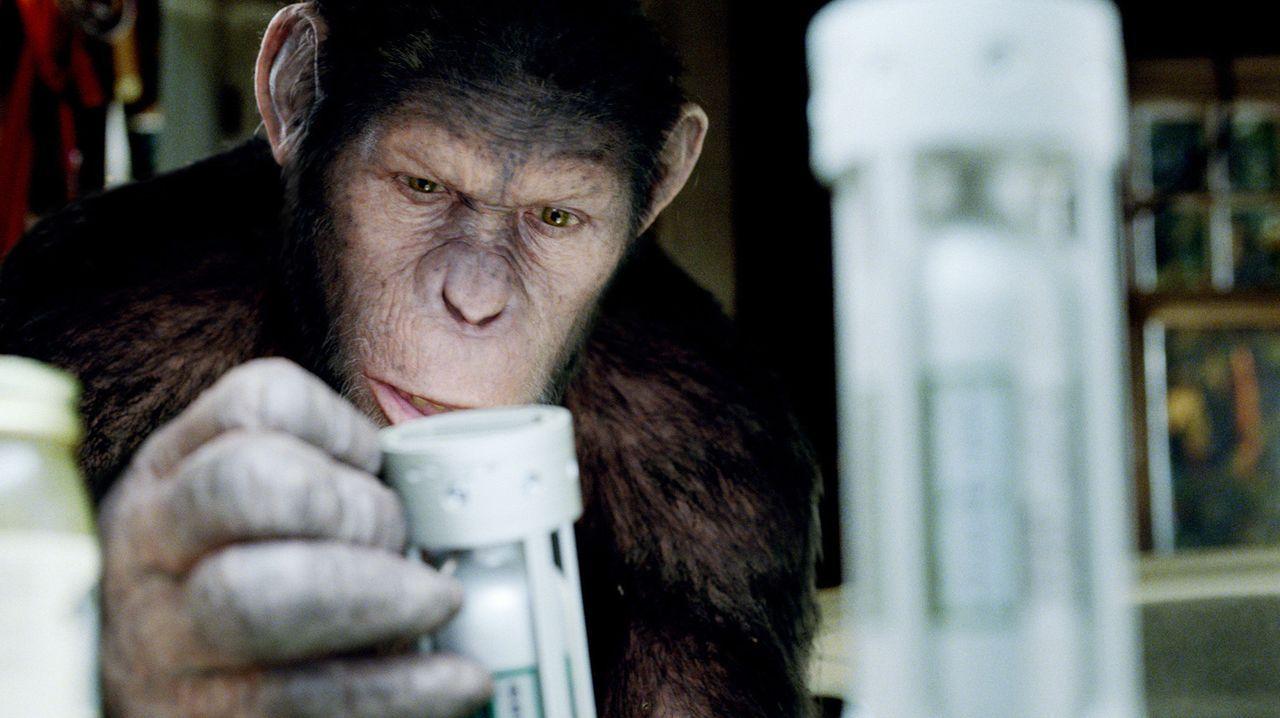 Schnell stellt sich heraus, dass Caesars Intelligenz der seiner Artgenossen weit überlegen ist. Als der Schimpanse auf gerichtliche Anordnung im Ti... - Bildquelle: 2011 Twentieth Century Fox Film Corporation. All rights reserved.