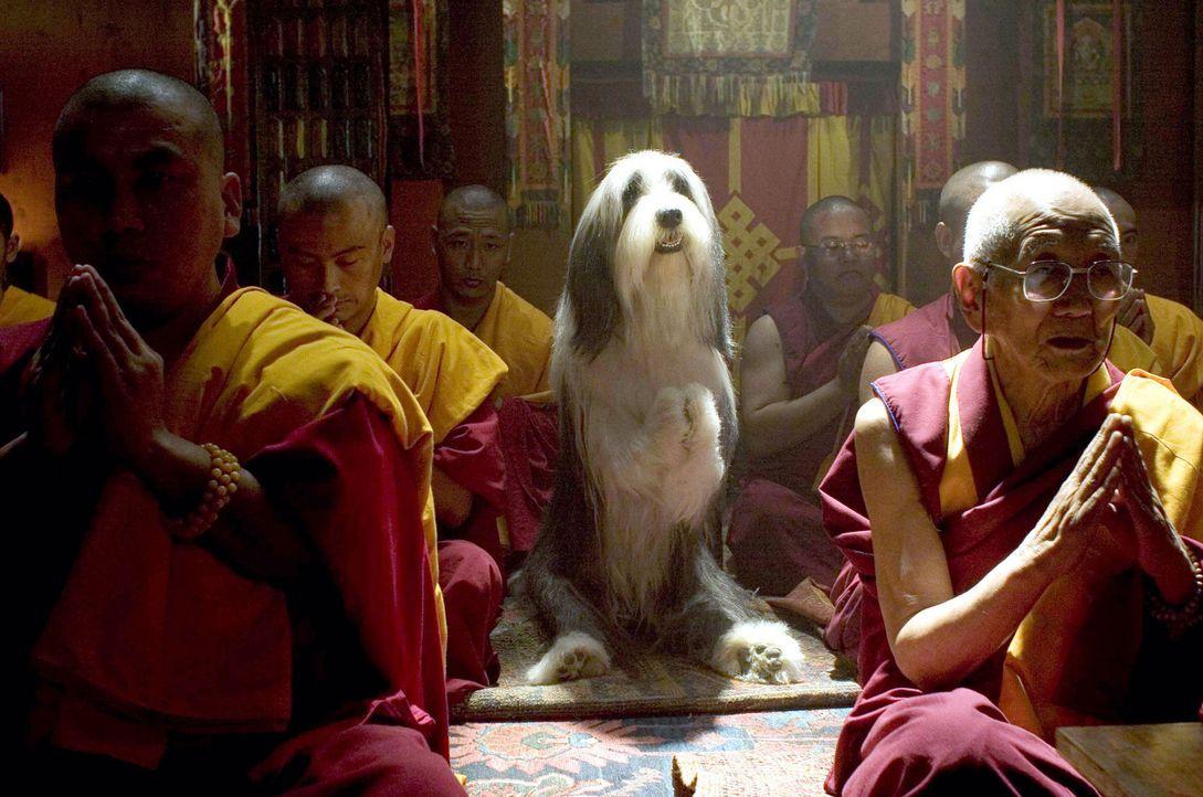 Auch als Hund möchte man den Kontakt zu Gott nicht verlieren ... - Bildquelle: Disney Enterprises, Inc. All rights reserved