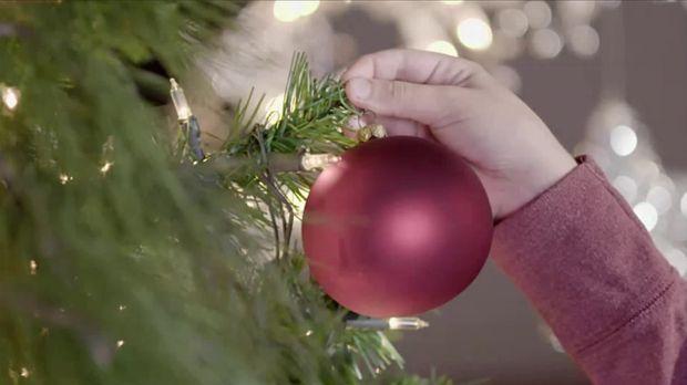 weihnachtsbaum k fer l use und zecken leben in einer tanne. Black Bedroom Furniture Sets. Home Design Ideas