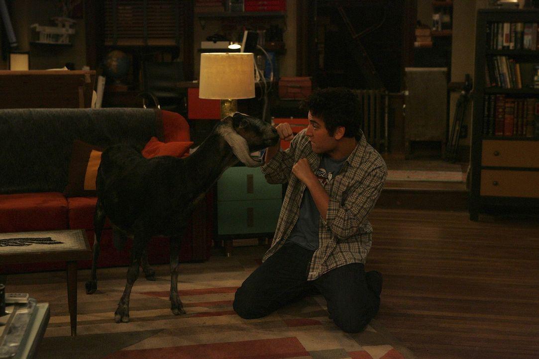 Ted (Josh Radnor) versucht seine Präsentation fertig zu stellen, während die Ziege, die Lily vor einiger Zeit vom Schlachter gerettet hat, im Wohn... - Bildquelle: 20th Century Fox International Television
