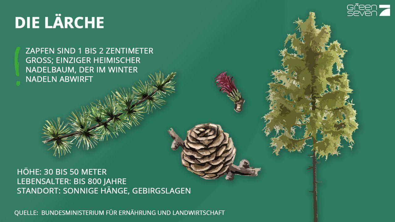 Laerche - Bildquelle: ProSieben