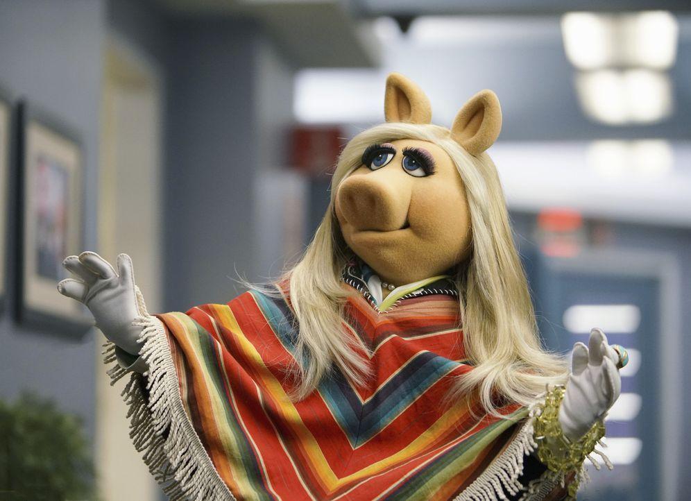 Hat neue Erkenntnisse im Urlaub getroffen: Miss Piggy ... - Bildquelle: Andrea McCallin ABC Studios