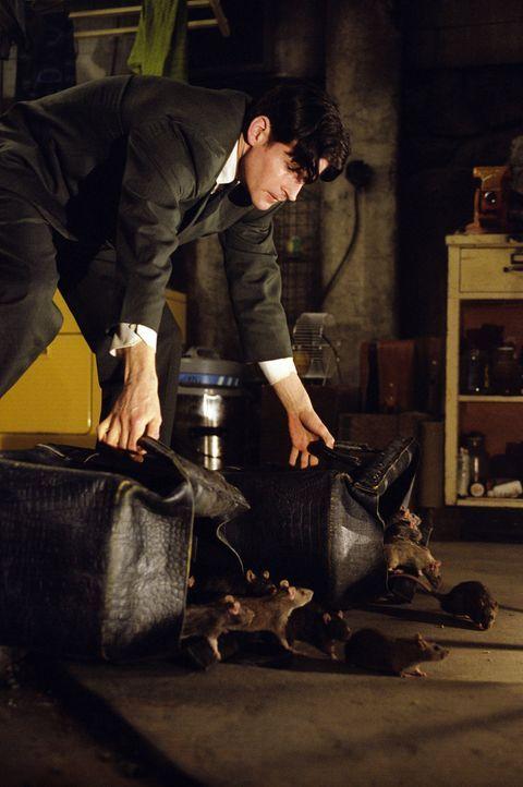 Eiskalt setzt die Willard (Crispin Glover) die kleinen blutrünstigen Monster für seine Rachepläne ein ... - Bildquelle: Warner Bros. GmbH