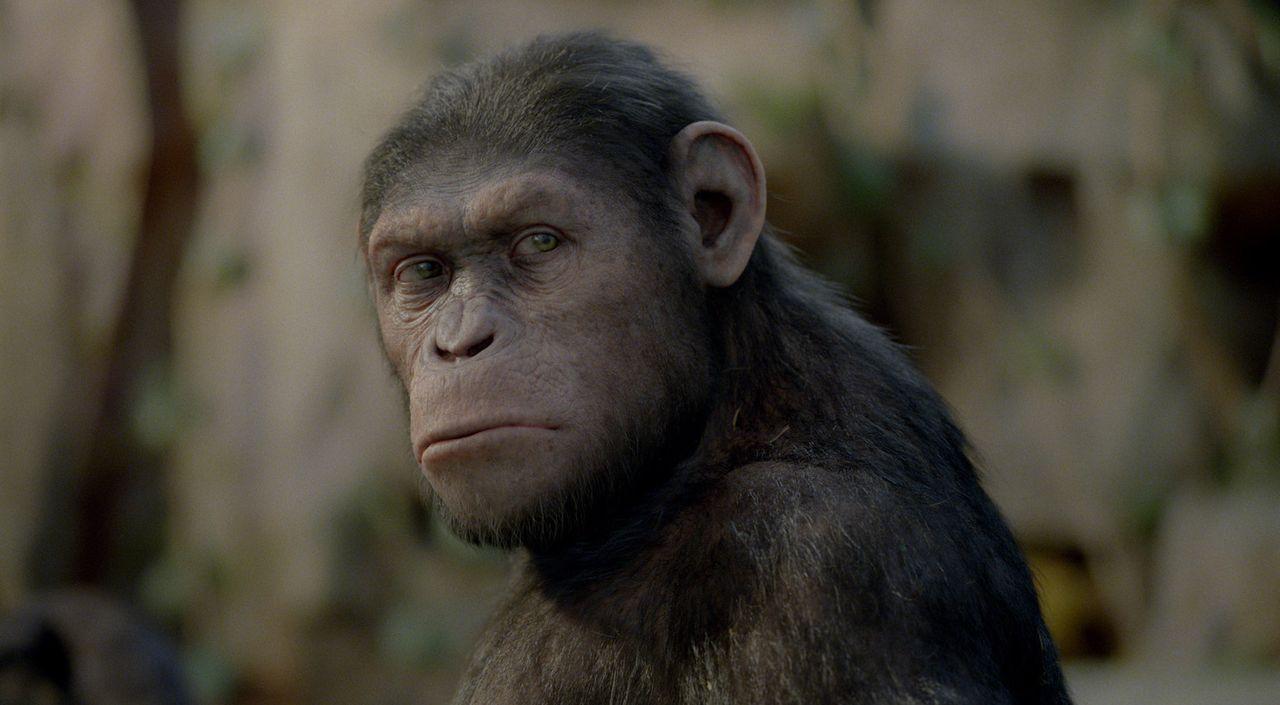 Endlich darf Will seinen geliebten Schimpansen aus dem Tierheim holen und wieder mit nach Hause nehmen. Doch Caesar entschließt sich, dort zu bleib... - Bildquelle: 2011 Twentieth Century Fox Film Corporation. All rights reserved.
