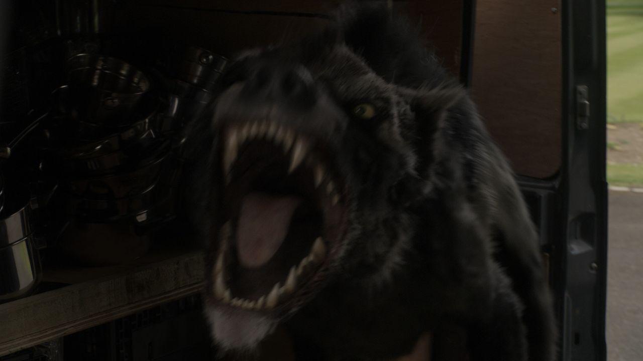 Im Keller eines herrschaftlichen Anwesens öffnet sich eine Anomalie. Das Team rückt aus und schafft ein männliches Hyaenodon in die Urzeit zurüc... - Bildquelle: ITV Plc