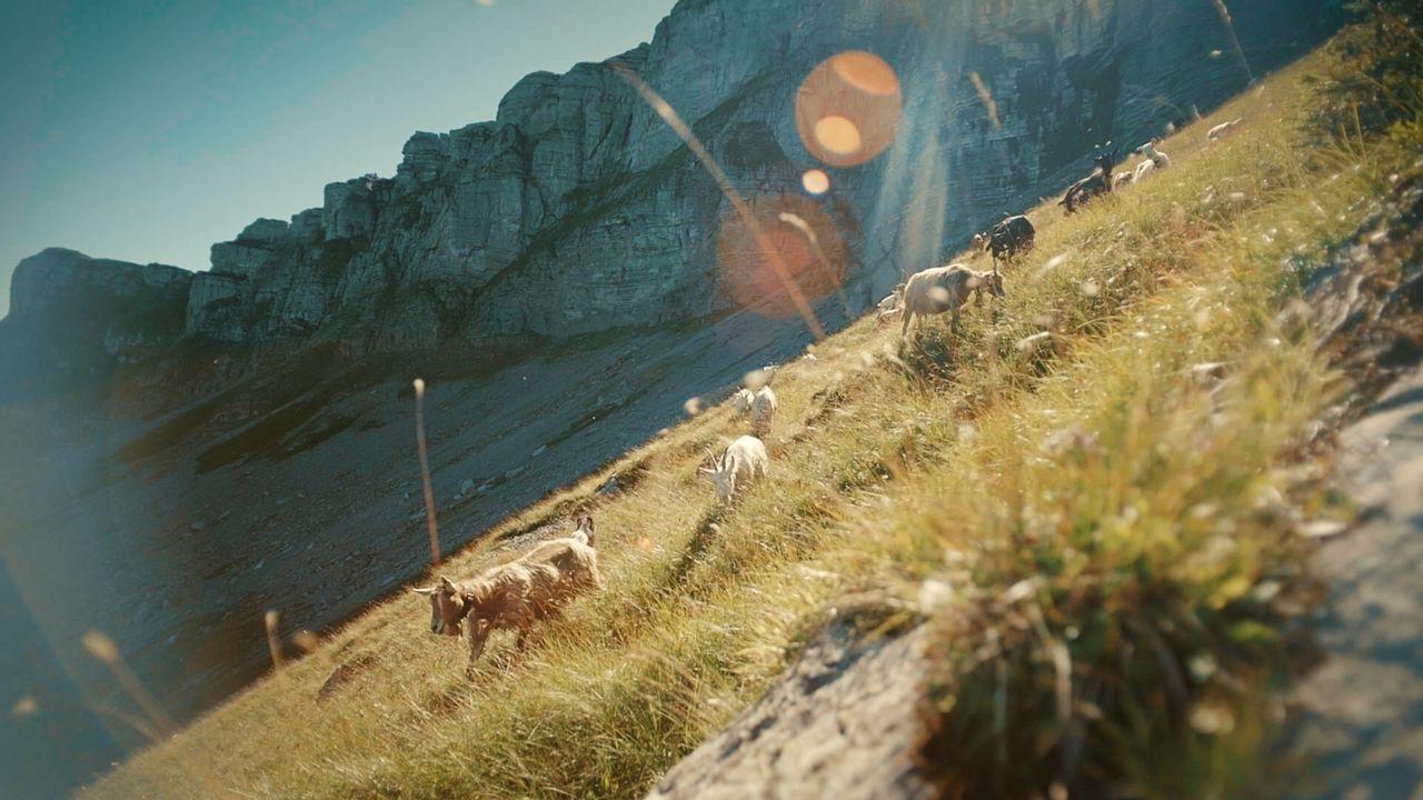 Hoch über dem Brienzersee im Oberberg Alpiglen trifft René auf über hundert ... - Bildquelle: ProSieben Schweiz