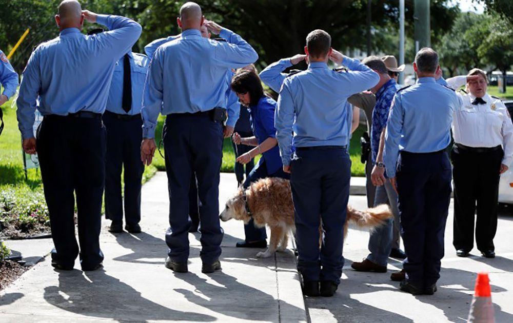 9/11 Hund - Bildquelle: dpa